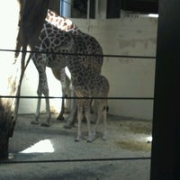 Photo taken at Giraffe Complex by Danielle L. on 4/10/2012