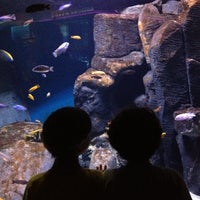 Photo taken at New York Aquarium by Megan A. on 7/31/2012
