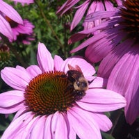 Photo taken at Chicago Botanic Garden by Teddy C. on 7/15/2012