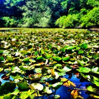 Photo taken at Cliff Pond by J.C. B. on 8/4/2012