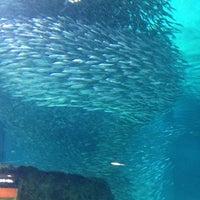Photo taken at COEX Aquarium by Shawn B. on 4/19/2012