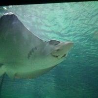 Photo taken at Ripley's Aquarium by Jillian C. on 2/14/2012