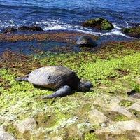 Foto tomada en Laniakea (Turtle) Beach por Jenn el 5/4/2012