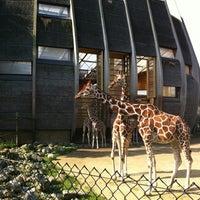 Photo taken at Giraffen by Pepijn S. on 8/14/2012
