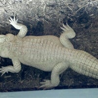 Photo taken at Alligator Adventure by Kelli Z. on 6/13/2012
