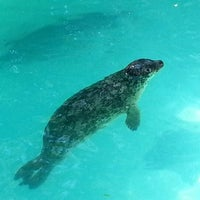 Photo taken at Aquarium of Niagara by Douglas M. on 7/10/2012