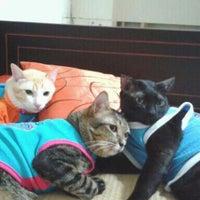 Photo taken at pet gang home by khwan B. on 4/9/2012