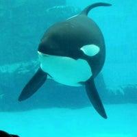Photo taken at Port of Nagoya Public Aquarium by momota_don モ. on 3/23/2012