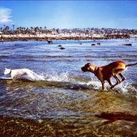 Photo taken at Ocean Beach Dog Beach by Josh D. on 8/8/2012