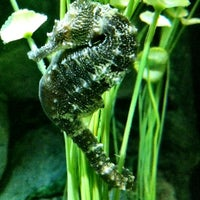 Photo taken at Sea Life Aquarium by Niki H. on 3/27/2012