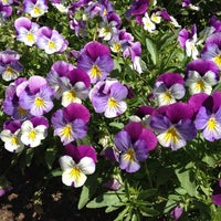 Photo taken at Sarah P. Duke Gardens by Matthew R. on 4/8/2012