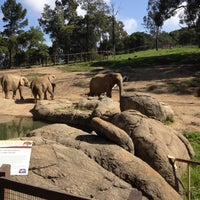 Photo taken at African Elephants by Rozie G. on 4/19/2012