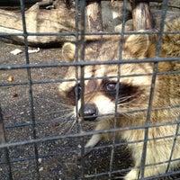 Das Foto wurde bei Зоопарк «Лимпопо» von Сергей Щ. am 4/1/2012 aufgenommen