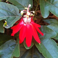 Photo taken at Marie Selby Botanical Gardens by Clive M. on 3/3/2012