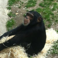 Photo taken at Monkey World - Ape Rescue Centre by Malcolm P. on 8/13/2012