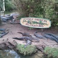 Photo taken at Alligator Adventure by Jason E. on 8/29/2012