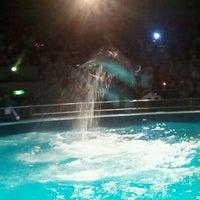 Photo taken at Dolfinarium by Ronald v. on 5/29/2012