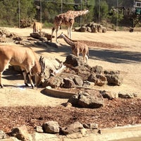 Photo taken at Oakland Zoo by Mark O. on 2/25/2012