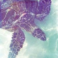 Das Foto wurde bei Mauna Kea Beach von Alejandro C. am 5/29/2012 aufgenommen