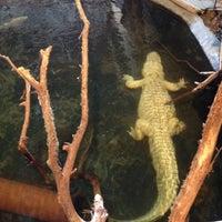 Photo taken at Alligator Adventure by Adam C. on 5/12/2012
