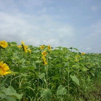 Photo taken at JAひまわりランド by Hai K. on 7/18/2012