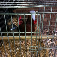 Photo taken at Our Little Chicken Coop by Audrey P. on 4/2/2012