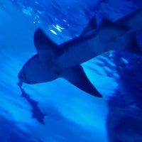 8/20/2012 tarihinde ahmet l.ziyaretçi tarafından Antalya Aquarium'de çekilen fotoğraf
