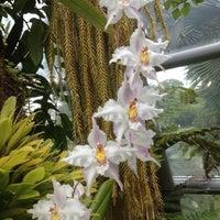 Das Foto wurde bei National Orchid Garden von Marian M. am 2/25/2012 aufgenommen