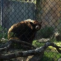 Photo taken at Orange County Zoo by Melissa K. on 2/18/2012