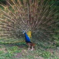 Снимок сделан в Ботанический сад КубГАУ им. И.С. Косенко пользователем Milana 👑 b. 5/10/2012