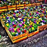 Foto tomada en Mercado de Plantas y Flores  Madreselva por Ꮿ ॐ. el 3/11/2012