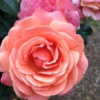 Photo taken at Raleigh Rose Garden by Elizabeth B. on 6/10/2012