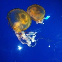 Photo taken at Aquarium of The Pacific by Dennis L. on 5/19/2012
