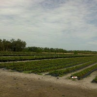 Photo taken at Pappy's Strawberry Patch by K. G. on 3/24/2012