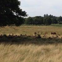 Das Foto wurde bei Richmond Park von Aleksandrs Z. am 9/9/2012 aufgenommen