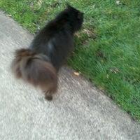 Photo taken at Black Cat Spotting by Chloe E. on 3/17/2012