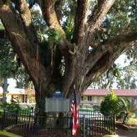 Photo taken at The Old Senator Tree by Robin B. on 9/5/2012