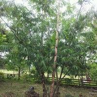 Photo taken at Exploding Bamboo Shoots by Cartojano R. on 7/27/2012