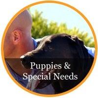 Blue Chip Pet Care