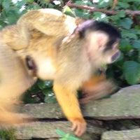 Photo taken at Apenheul Primate Park by Jelmer K. on 8/11/2012