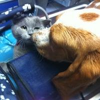 8/22/2012 tarihinde Bulent İ.ziyaretçi tarafından Lena Veteriner Klinigi'de çekilen fotoğraf