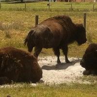 Photo taken at Westgate River Ranch by Jeffrey P. on 4/30/2012