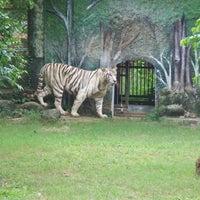Photo taken at Nandankanan Zoological Park by Subrat D. on 8/10/2012