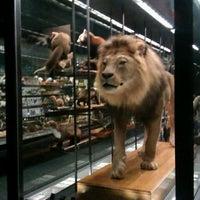 Foto tomada en Museu Blau por Dasha I. el 5/6/2012