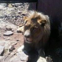 Photo taken at Kingdom Of The White Lion by boneshaker011 on 9/3/2012