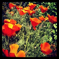 Photo taken at Descanso Gardens by Sparrow F. on 4/23/2012
