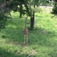 Photo taken at Giraffe Complex by Josh W. on 5/26/2012