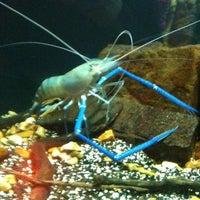 Foto tomada en Oklahoma Aquarium por Priscilla T. el 2/20/2012