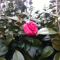 Photo taken at Camellia Hill by Yoohwa(ユーファ) L. on 3/8/2012