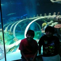 Photo taken at Sea Life Aquarium by Angela R. on 6/16/2012